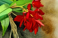Red-Orchid_SM