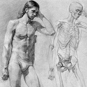 Anatomy Sketch Series